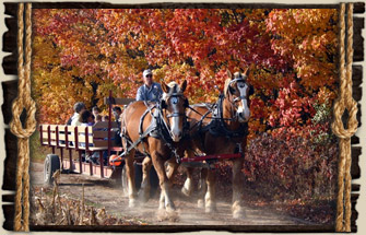 Horse Drawn Hayrides