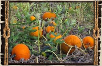 Diy fall pumpkin patch sign little red window.