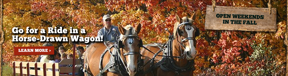 Horse-Drawn Hayrides - Kent County, MI